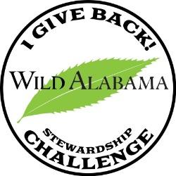Stewardship Challenge